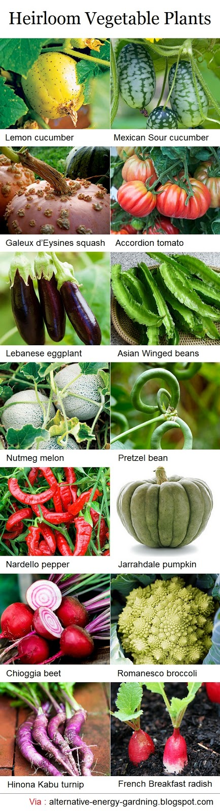 Heirloom vegetable plants dream garden 101 for Gardening 101 vegetables