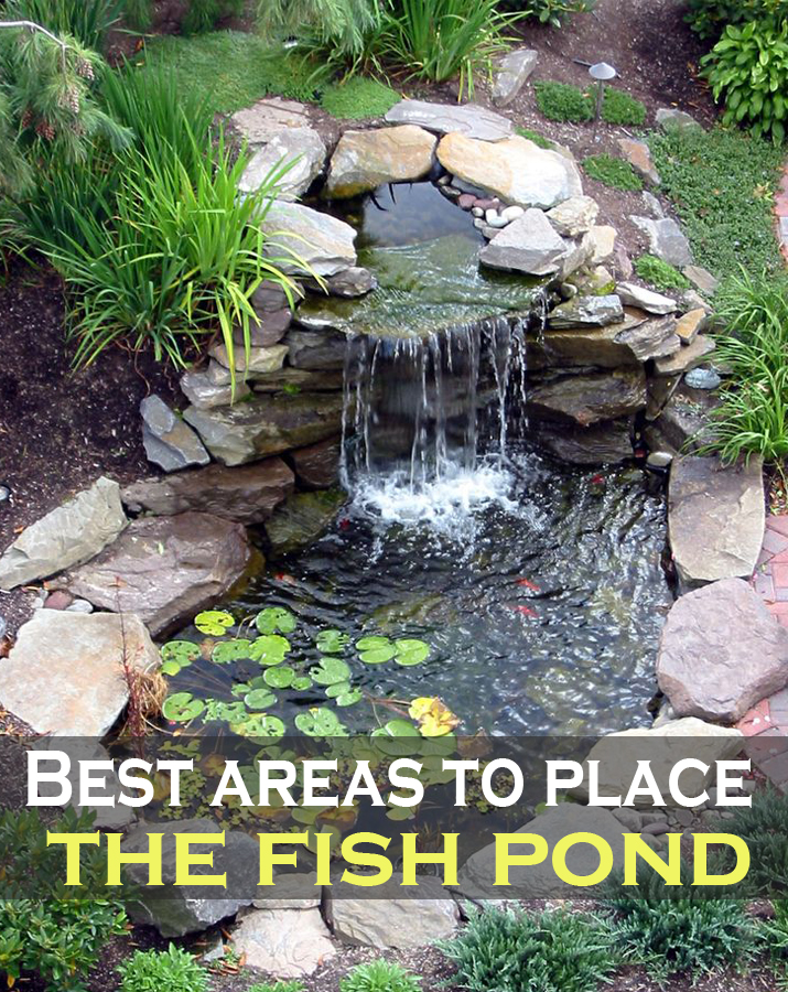 Best areas to place the fish pond green leaf tips for The fish place