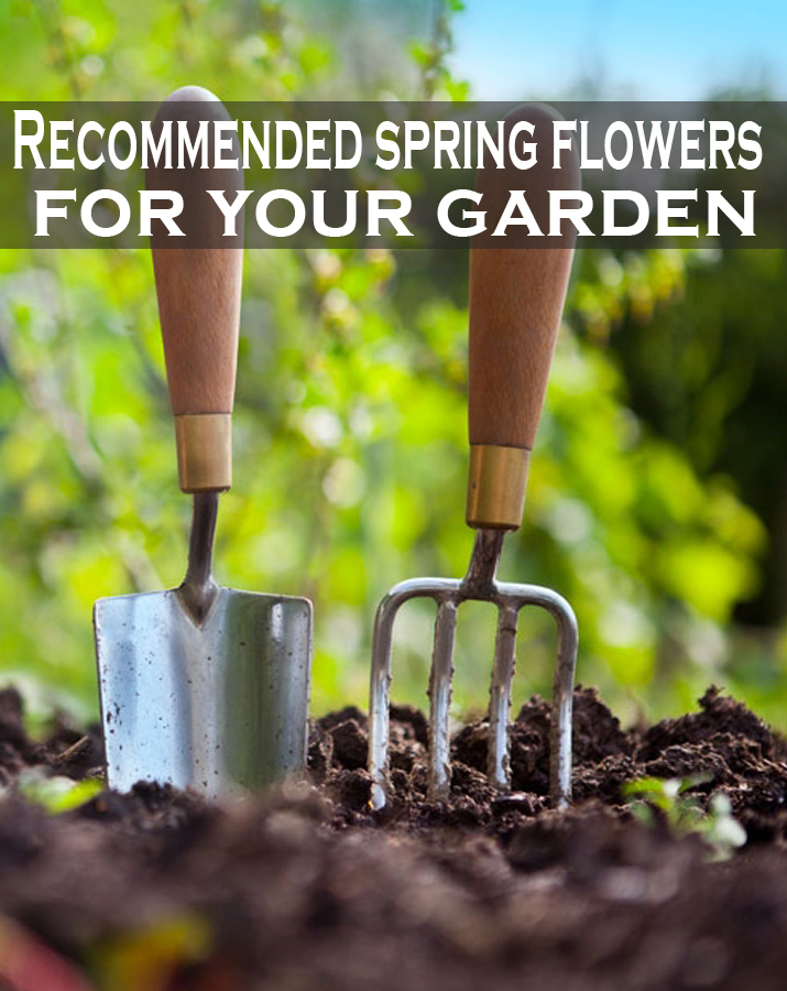 Garden Design With Spring Flowers For Your Cottage Driveway Landscaping From Allthingscottage Com