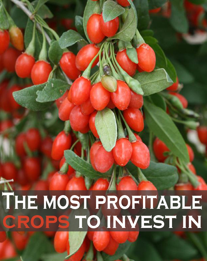 The most profitable crops to invest in green leaf tips - Profitable crops small plots ...